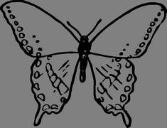 Motýlek