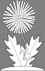 Pampeliška