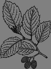 Větvička