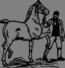 Žokej s koněm